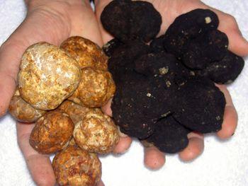 Zwarte en witte truffels.jpg